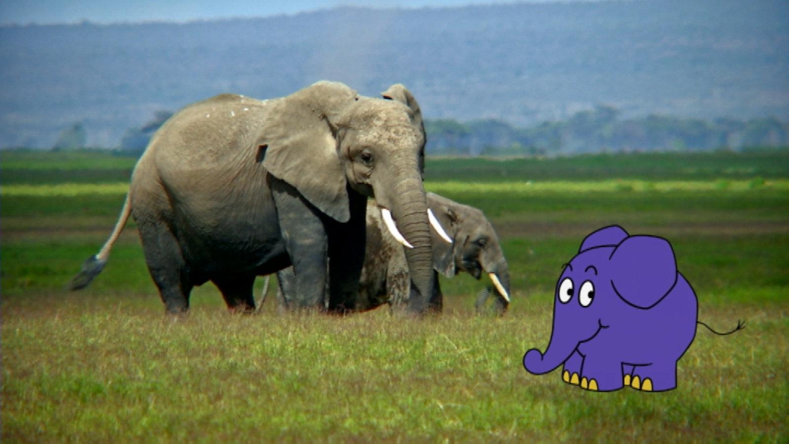 Video sachgeschichte elefantenfakten kinder for Die kinder des