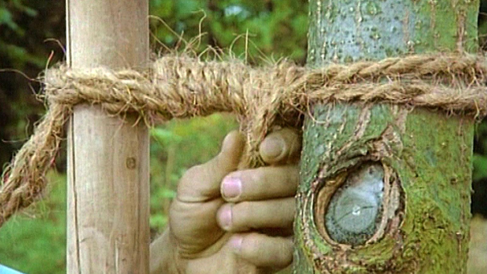 Prächtig Sachgeschichte - Knoten: Baum - TV - Kinder &ZT_81